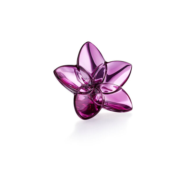 THE BLOOM COLLECTION, Peony